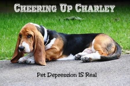 pet depression