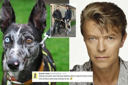 David Bowie the Dog