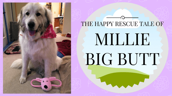 The Happy Rescue Tale of Millie Big-Butt
