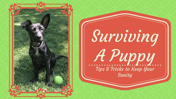 Surviving A Puppy