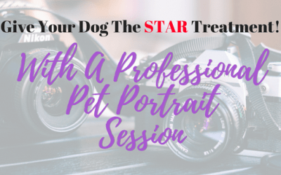 Give Your Dog the Star Treatment with a Professional Pet Portrait Session