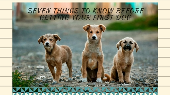 Seven Things To Know Before Getting Your First Dog