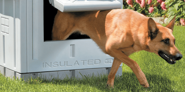 10 Best Dog Houses To Buy In October 2020 Buyer S Guide