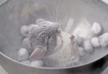 Best Chinchilla Dust Bath Houses and Dusts