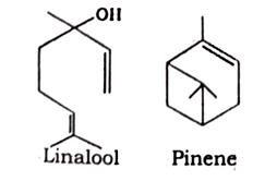 Coriander Fruit Chemical constituents