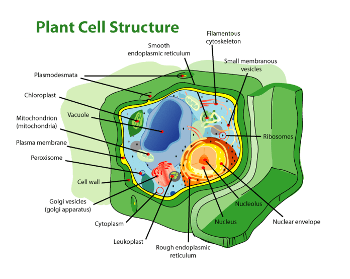cell wall and its types