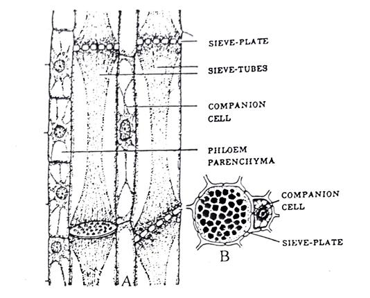 complex tissue