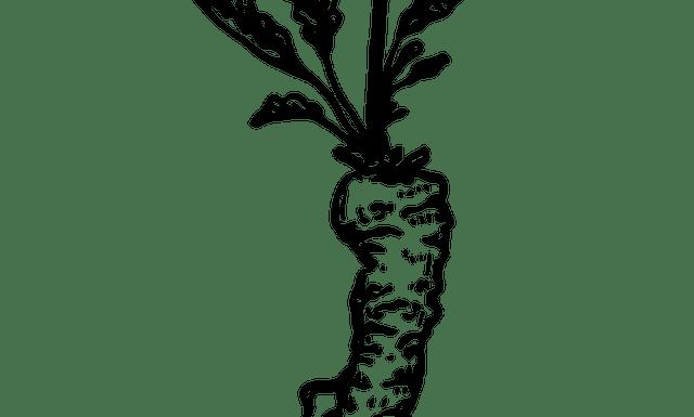 Roots in Pharmacognosy