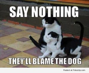 funny-cats-013