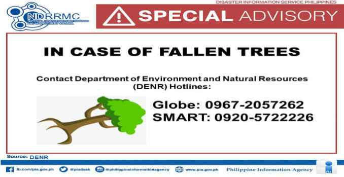 if there are fallen trees