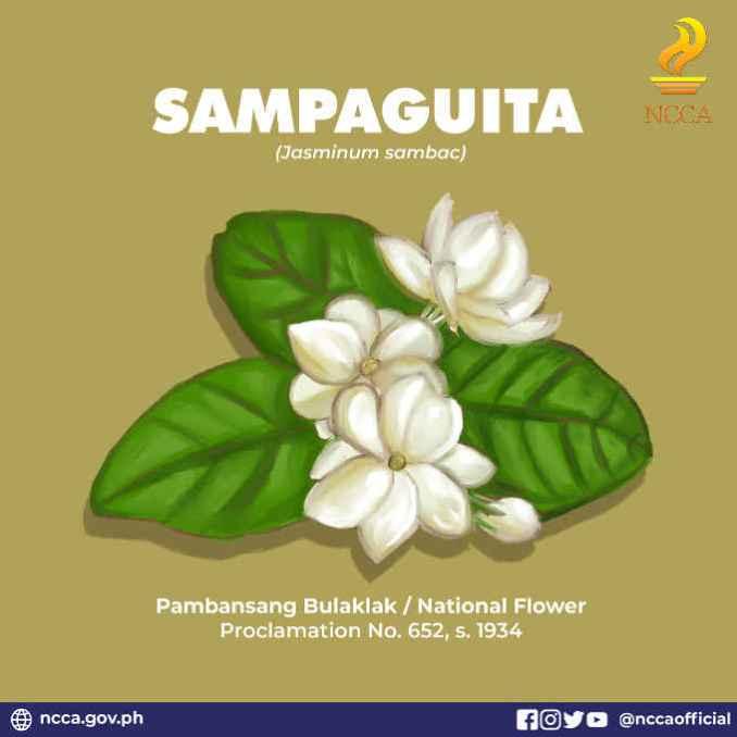 Why sampaguita is the national flower of the philippines