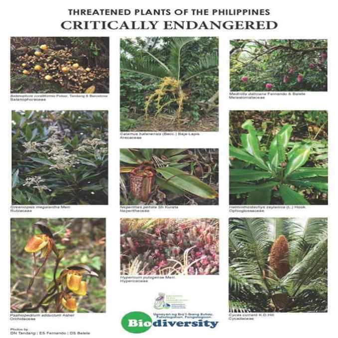 critically endangered plants in the philippines