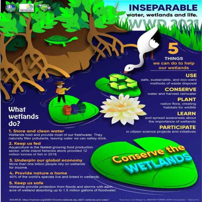 what do wetlands do