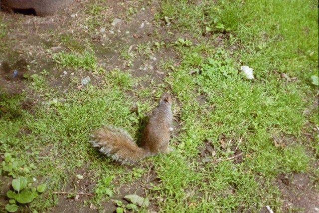 2005-Boston-MA-Squirrel
