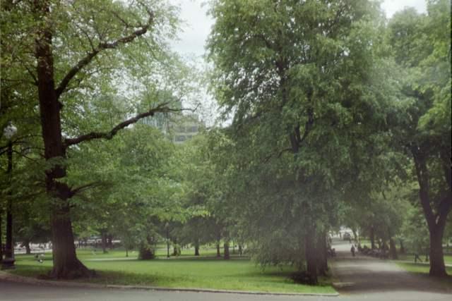 2005-Boston-MA-Trees-on-Freedom-Trail-1