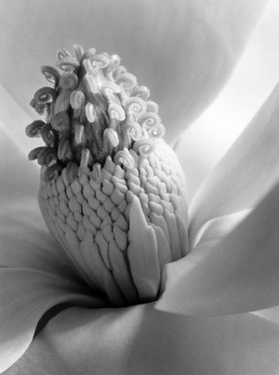 Magnolia_Blossom_Tower_of_Jewels_1925