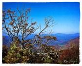 Mountain Ash on top of Elk Knob