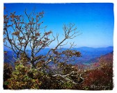 Mountain Ash on top of Elk Knob