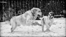 17-52 big fluffy snowfall