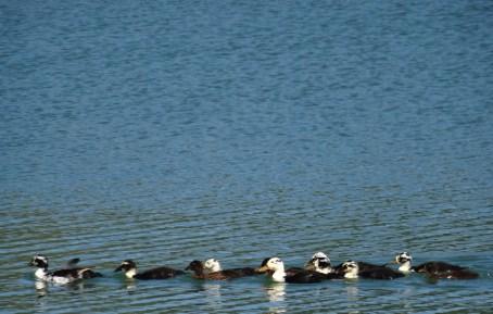 A spring full of birds on Lago d'Averno