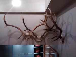 Interlaced antlers cast fantastic shadows. Installed as the entrance piece to a farmhouse in Gloucestershire.