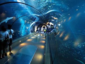 800px-Aquarium_tunnel