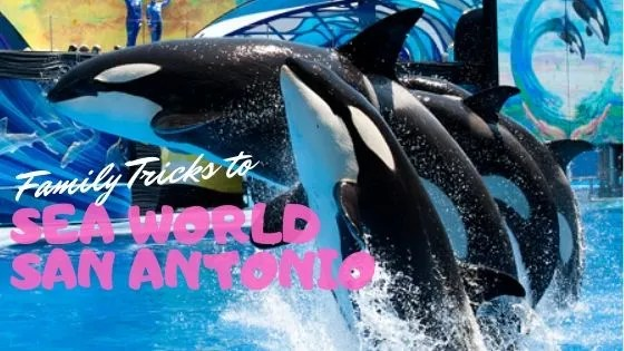 How to Visit Sea World Texas and SCORE!  Sea World Hacks