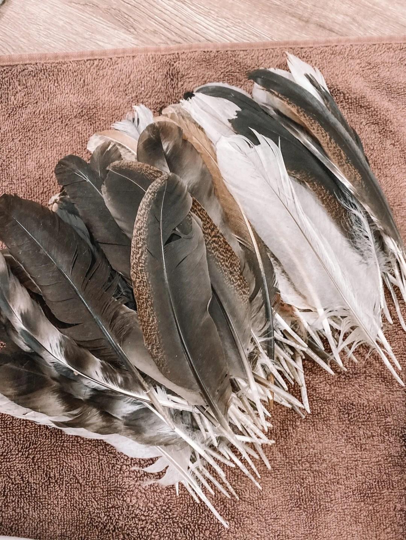 Chicken Feather Art