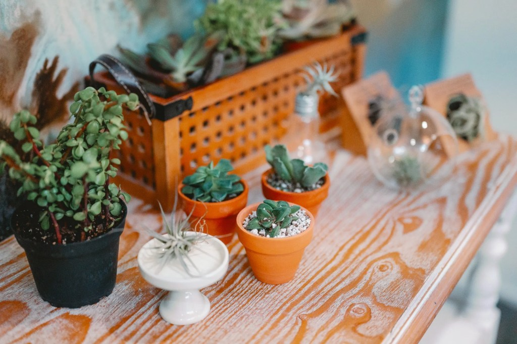 Best Air Plant Subscriptions