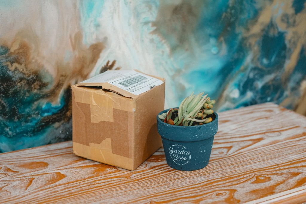 Succulent Lovers Box Review