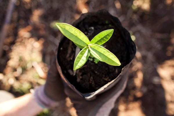 platbos forest_green cape town_annika ziehen - 2