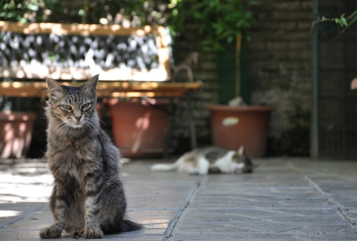 torre-argentina-cat-sanctuary