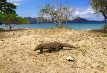 A Guide to Visiting Komodo National Park (and a FREE TRIP Giveaway!!)