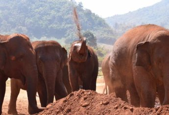 A Visit to Chiang Mai's Elephant Nature Park