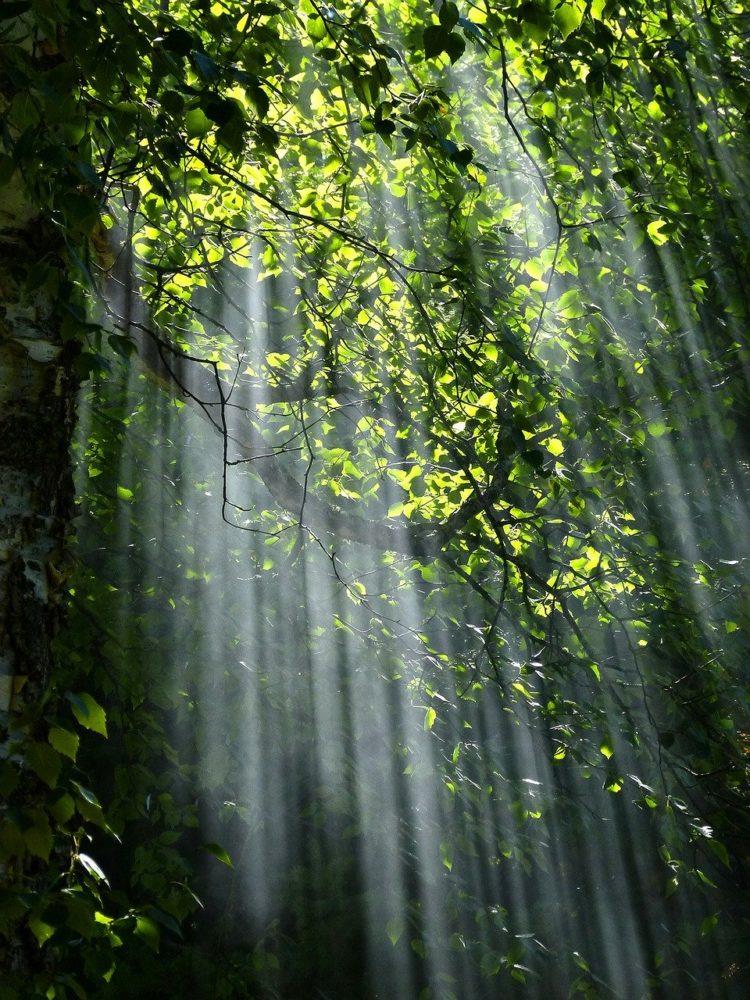 Light as Subject