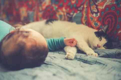 newborn with pet cat