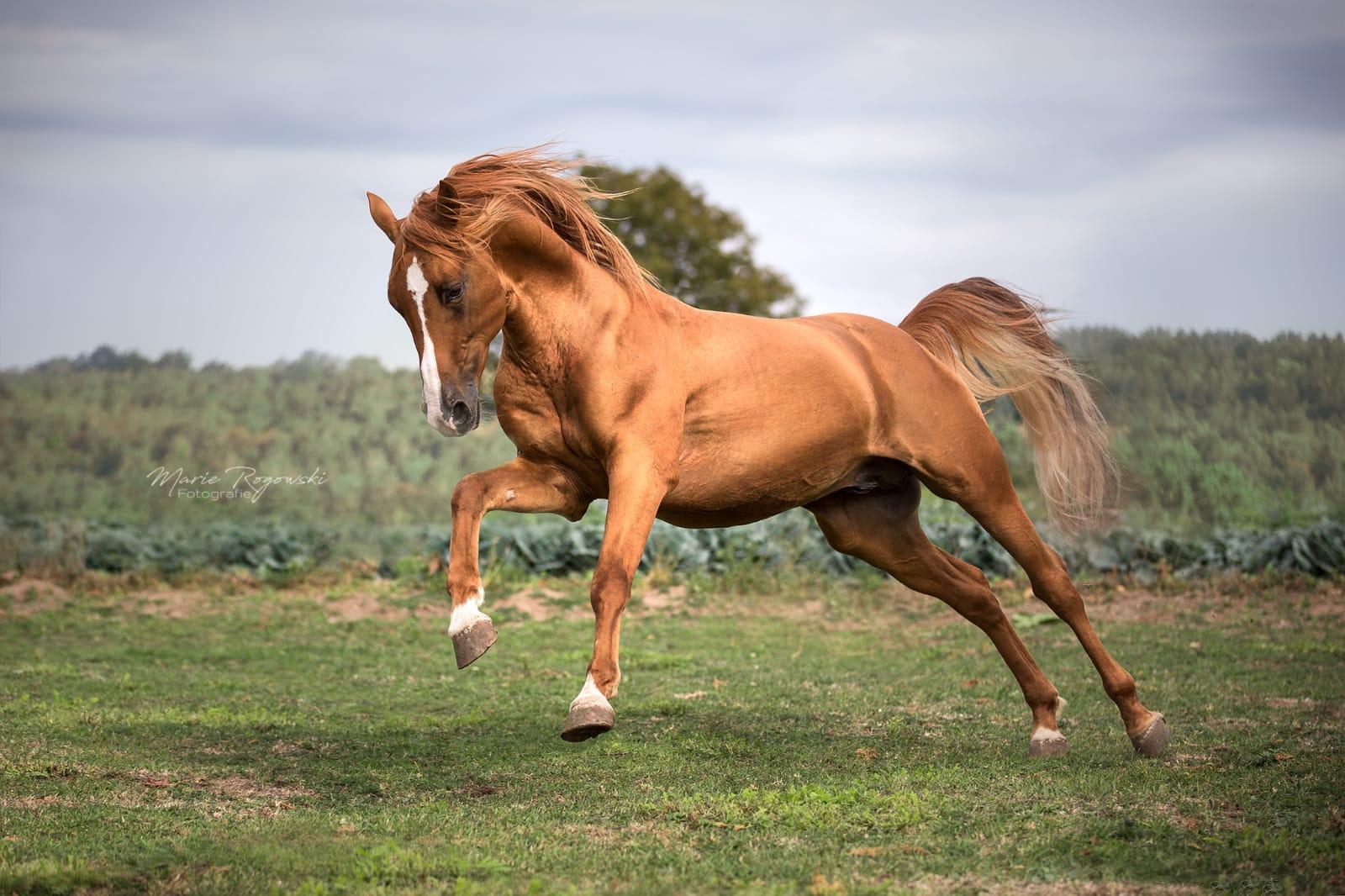 MR-Explorer-Tour-Russian-Horses