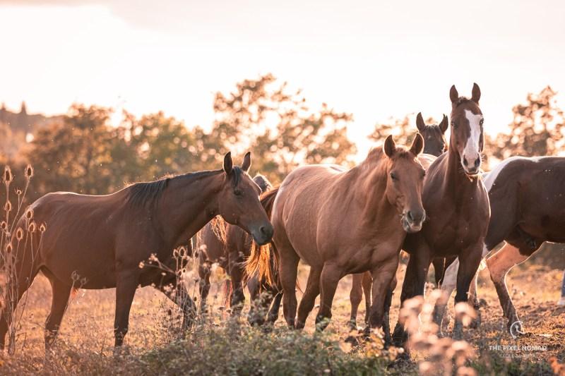 Explorer Tour Italy: Quarter Horses