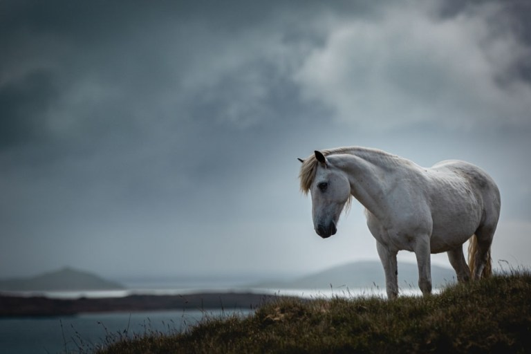 APA 2020 Photo Awards: Equine Explorer