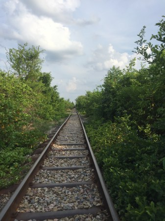 Bamboo train tracks