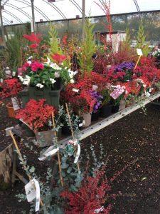 Plants Archives The Plant Market