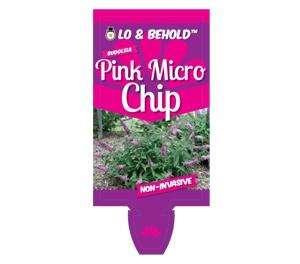 Buddleja - Pink Micro Chip - Butterfly Bush