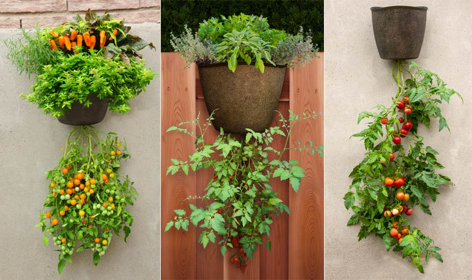 Fruits And Vegetables Can Take Up A Considerable Measure Of Space In Your  Garden. Those Of You Who Donu0027t Have Enough Space, Think That Eatable  Gardens Are ...