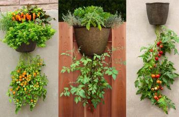 G365HGSB-Hanging-Tomato-Planter