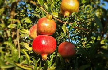 fruit-659058_1280