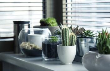 pots-716579_1280