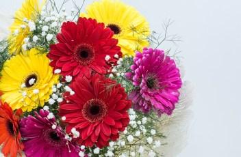 flowers-2037783_1280