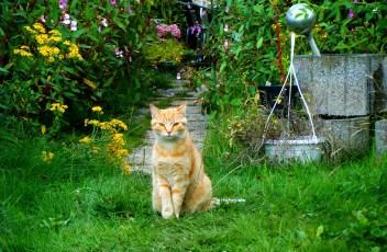 cat-2111634_1920