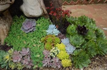 plant-960324_1280