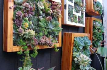 Vertical-Succulent-Garden